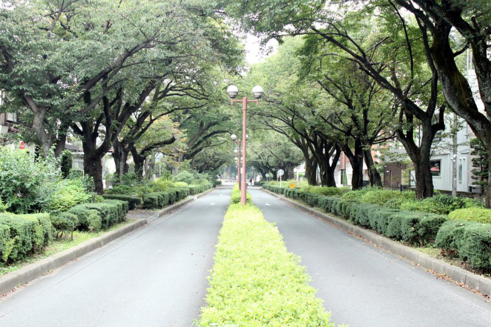 東京学芸大学のキャンパスも緑豊かな環境